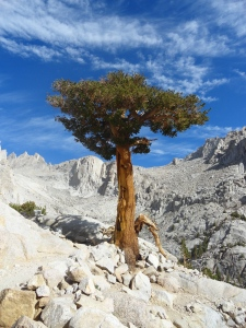 Tree in Granite