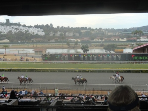The Horses Being Paraded Around Before the Race