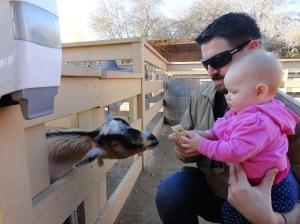 Goats Love Ice Cream Cones