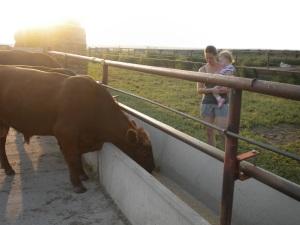 Feeding the Bulls