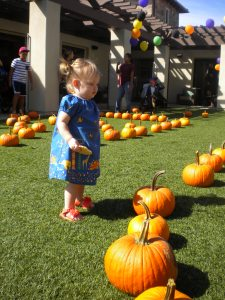 Picking Out Pumpkin #2