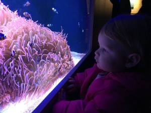 Watching Nemo Swim at the Toledo Zoo Aquarium