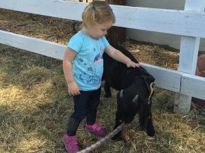 Petting a Goat at Hagemann Ranch