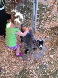 Vivian Brushing a Goat in the Fair's Petting Zoo