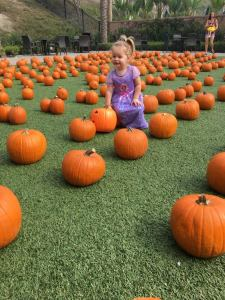 Baker Ranch Pumpkin Patch